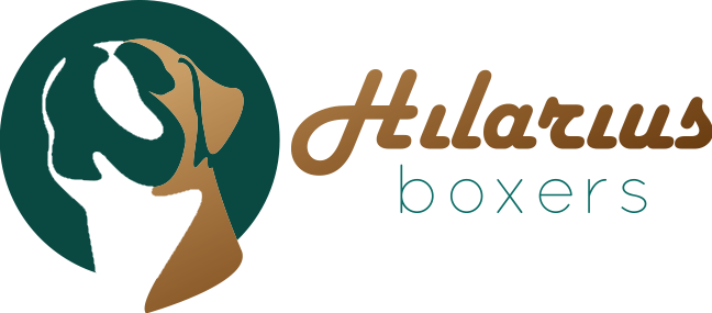 Hilarius Boxers